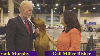 Road to Westminster (RTW):  Breeder 101 Frank Murphy