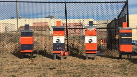 This Thursday, Nov. 16, 2017, photograph, shows four hives on the property of the Denver Broncos NFL football headquarters in Englewood, Colo. It is believed that the Broncos are the first professional sports team to serve as beehive hosts. (AP Photo/Arnie Stapleton)