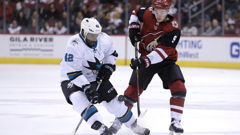 San Jose Sharks right wing Joel Ward (42) and Arizona Coyotes center Clayton Keller battle for the puck in the second period during an NHL hockey game, Tuesday, Jan. 16, 2018, in Glendale, Ariz. (AP Photo/Rick Scuteri)