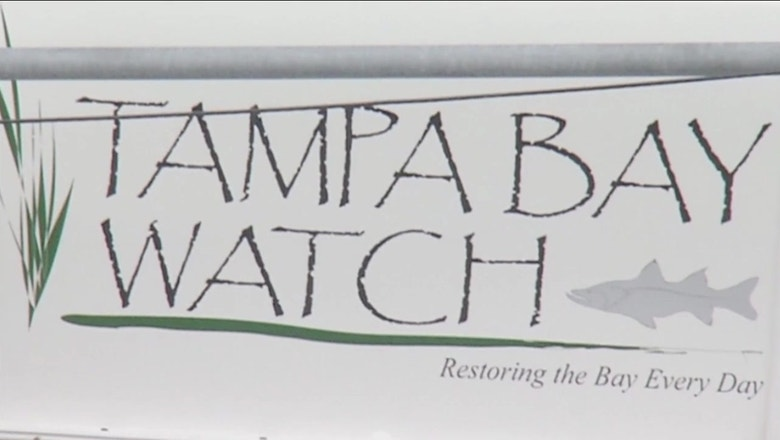 Cleaning up: How one local group is working to improve Tampa Bay