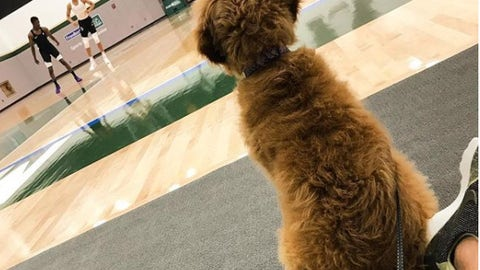 Mila, loyal dog of Giannis Antetokounmpo