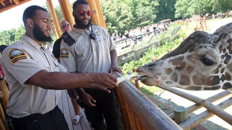 <p>               In this July 6, 2018, photo, University of Minnesota football players Jerry Gibson, right, and Winston DeLattiboudere feed a giraffe while working as security guards this summer at the Como Park Zoo and Conservatory for the city of St. Paul, Minn., a few miles from the university campus. One of the Gophers coaches connected them to the opportunity. (AP Photo/Jim Mone)             </p>