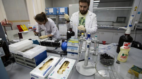 <p>               FILE - In this May 24, 2016, file photo, lab technicians work at Russia's national drug-testing laboratory in Moscow, Russia. A delegation from the World Anti-Doping Agency arrived for talks Wednesday with Russian authorities in Moscow as it tries to access data which could mean more bans for top Russian athletes who cheated in past years. (AP Photo/Alexander Zemlianichenko, File)             </p>