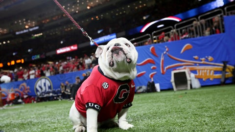 <p>               Uga, the Georgia mascot, sits near the sideline during the second half of Georgia's Sugar Bowl NCAA college football game against Texas in New Orleans, Tuesday, Jan. 1, 2019. (AP Photo/Rusty Costanza)             </p>