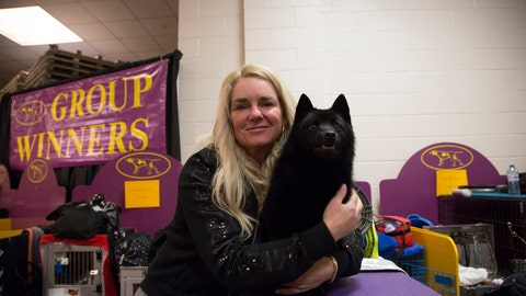<p>               Colton the Schipperke poses with his handler Christa Cook backstage at Madison Square Garden during the Westminster Kennel Club Dog Show in New York, Tuesday, Feb. 12, 2019. A day after winning the nonsporting group and a place in the final ring of seven, Colton was ruled ineligible for best in show. (AP Photo/Nat Castaneda)             </p>