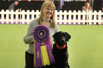Watch 'Heart' the black lab win the Masters Obedience Championship for the fourth consecutive year