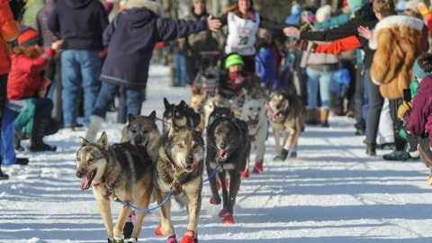 <p>               Rookie Victoria Hardwick's team leads the way through cheering fans during the ceremonial start of the Iditarod Trail Sled Dog Race, Saturday, March 2, 2019 in Anchorage, Alaska. (AP Photo/Michael Dinneen)             </p>