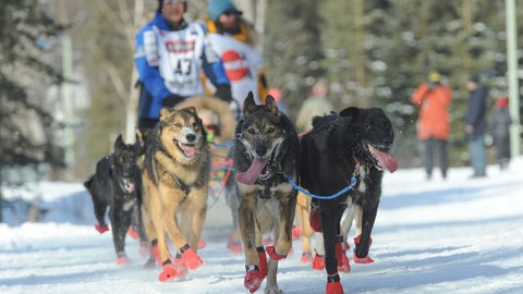 <p>               Iditarod musher Mishi Konno runs his team along the trail during the ceremonial start of the Iditarod Trail Sled Dog Race, Saturday, March 2, 2019 in Anchorage, Alaska. (AP Photo/Michael Dinneen)             </p>