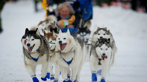 <p>               FILE - In this March 3, 2018, file photo, Eagle River, Alaska musher Tom Schonberger's lead dogs trot along Fourth Avenue during the ceremonial start of the Iditarod Trail Sled Dog Race in Anchorage, Alaska. The world's foremost sled dog race kicks off its 47th running this weekend on Saturday, March 2, 2019, as organizers and competitors strive to push past a punishing two years for the image of the sport. Some of the drama has been resolved for Alaska's Iditarod Trail Sled Dog race. (AP Photo/Michael Dinneen, File)             </p>