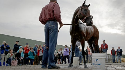 <p>               Kentucky Derby hopeful Omaha Beach gets a bath after a workout at Churchill Downs Tuesday, April 30, 2019, in Louisville, Ky. The 145th running of the Kentucky Derby is scheduled for Saturday, May 4. (AP Photo/Charlie Riedel)             </p>