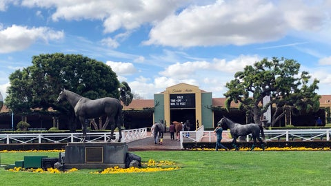 <p>               Horses are led to paddocks past the Seabiscuit statue during workouts at Santa Anita Park, as members of the California Horse Racing Board weigh new safety and medication rules in the wake of 22 horse deaths during a meeting at the track in Arcadia, Calif., Thursday, March 28, 2019. The board is considering whether to ban the use of medication and whips on racing days. If approved, Santa Anita would become the first racetrack in the nation to impose such restrictions. (AP Photo/Amanda Lee Myers)             </p>
