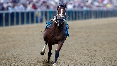 <p>               Bodexpress runs in the 144th Preakness Stakes horse race without John Velazquez at Pimlico race course, Saturday, May 18, 2019, in Baltimore. War of Will, ridden by Tyler Gaffalione won. (AP Photo/Patrick Semansky)             </p>