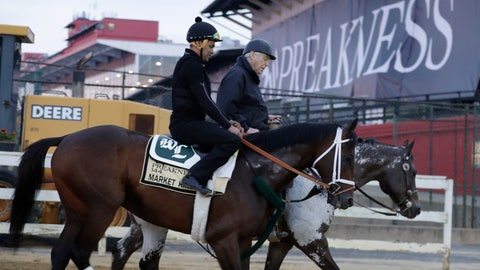 <p>               Market King heads back to the barn after a light workout as the field is prepared for the running of the 144th Preakness horse race at Pimlico race track in Baltimore, Md., Saturday, May 18, 2019. (AP Photo/Steve Helber)             </p>