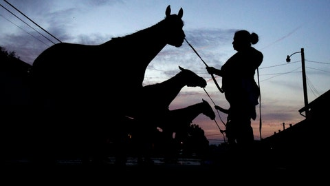 <p>               Horses get bathes after a workout at Churchill Downs, Wednesday, May 1, 2019, in Louisville, Ky. The 145th running of the Kentucky Derby is scheduled for Saturday, May 4. (AP Photo/Charlie Riedel, File)             </p>