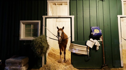 <p>               Improbable gets a morning snack as the field prepares for the running of the 144th Preakness horse race at Pimlico race track in Baltimore, Md., Saturday, May 18, 2019. (AP Photo/Steve Helber)             </p>