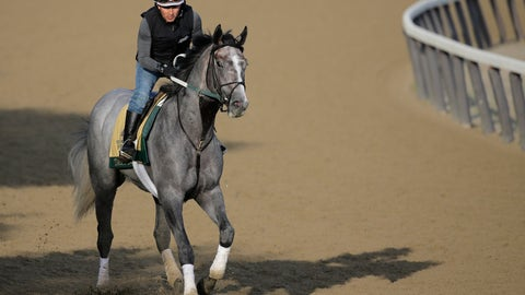 <p>               Exercise rider Joe Ramos rides Tacitus during a workout at Belmont Park in Elmont, N.Y., Friday, June 7, 2019. The 151st Belmont Stakes horse race will be run on Saturday, June 8, 2019. (AP Photo/Seth Wenig)             </p>