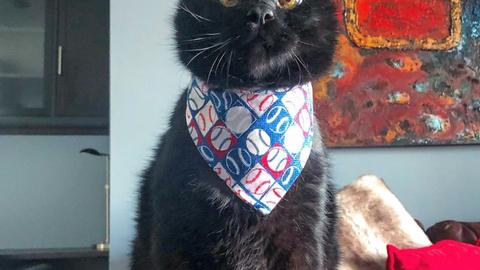 Snuckles, Twins pitcher Sam Dyson's cat