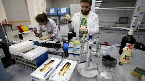 <p>               FILE - In this May 24, 2016, file photo, lab technicians work at Russia's national drug-testing laboratory in Moscow, Russia. The Russians were running out of time. Experts from the World Anti-Doping Agency were heading to Moscow to finally receive the trove of data they'd been seeking for two years. Instead of getting ready to hand it over, Russian authorities stayed busy in a round-the-clock endeavor to keep changing, deleting and manipulating the data. Granular details of the plot are sprinkled throughout WADA's previously confidential 89-page report, obtained by The Associated Press.  Among the most brazen projects, the report says, was the rewriting of memos to make it look as though the man who exposed the plot was leveraging the Russian doping scheme to line his own pockets. (AP Photo/Alexander Zemlianichenko, File)             </p>