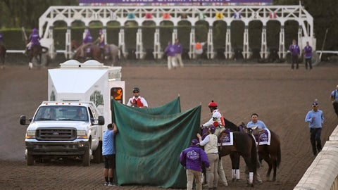 """<p>               Track workers treat Mongolian Groom after the Breeders' Cup Classic horse race at Santa Anita Park, Saturday, Nov. 2, 2019, in Arcadia, Calif. The jockey eased him up near the eighth pole in the stretch. The on-call vet says he has """"serious"""" injury to leg. Was taken to equine hospital on the grounds. (AP Photo/Mark J. Terrill)             </p>"""