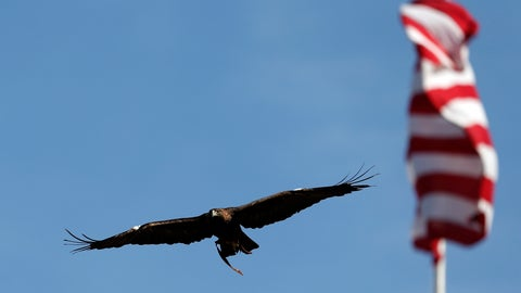 <p>               FILE- In this Nov. 14, 2015 file photo, Auburn's eagle, Nova, flies around the stadium before the start of an NCAA football game between Auburn and Georgia, in Auburn, Ala. Auburn University announced Friday. Nov. 22, 2019, that it is retiring its 27-year-old golden eagle mascot two years after it was grounded from flying at football games because of heart disease. (AP Photo/Butch Dill, File)             </p>