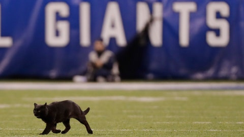 <p>               A cat runs on the field during the second quarter of an NFL football game between the New York Giants and the Dallas Cowboys, Monday, Nov. 4, 2019, in East Rutherford, N.J. (AP Photo/Adam Hunger)             </p>