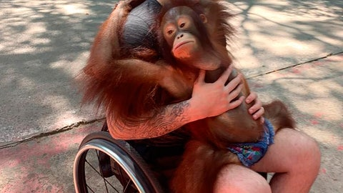 <p>               This photo provided by Tom Straschnitzki shows Ryan Straschnitzki as he plays with an orangutan during a visit to the Safari World zoo in Bangkok, Thailand, Sunday, Dec. 1, 2019. Ryan was left paralyzed from the chest down after the bus carrying his Humboldt Broncos hockey team collided with a truck at a rural intersection in Canada 17 months ago. The former hockey prospect went to Thailand to have a stimulator implanted in his back so electrical currents can communicate with his nerves. He took his first small steps and hopes for a better life. (Tom Straschnitzki/ via AP)             </p>