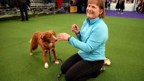 "<p>               Liberty, a Nova Scotia duck tolling retriever, and owner Marcia Lyons of Seattle get ready to compete at the Westminster Kennel Club's agility championship in New York, Saturday, Feb. 8, 2020. The retrievers, known as ""tollers,"" aren't too common in the sport, but ""I like to be a little different,"" Lyons said. (AP Photo/Jennifer Peltz)             </p>"