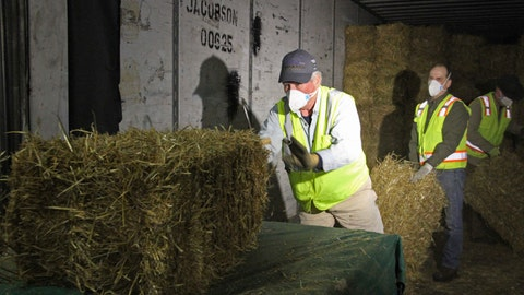 <p>               Stan Moll throws bales of hay onto a makeshift table in Anchorage, Alaska, on Thursday, Feb. 13, 2020, so other Iditarod volunteers could place the bales into plastic bags. About 1,500 bales will be flown to checkpoints along the Iditarod Trail Sled Dog Race, which begins March 7, and will be put down on the snow and ice so the canine participants in the race have a warm place to sleep. (AP Photo/Mark Thiessen)             </p>