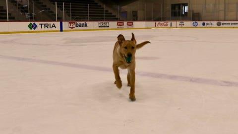 Breezer, Wild team puppy