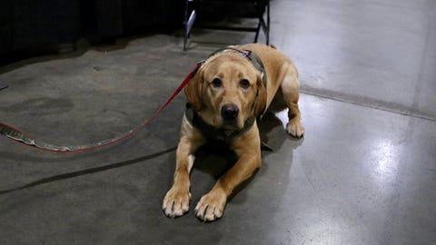 Breezer, Wild puppy