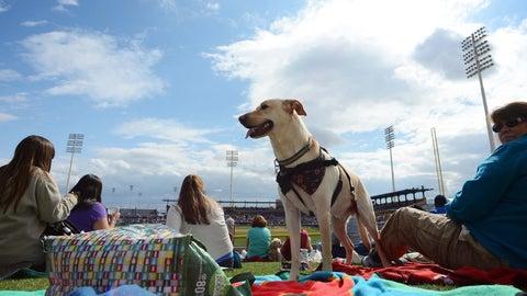 Spring home: Peoria Sports Complex