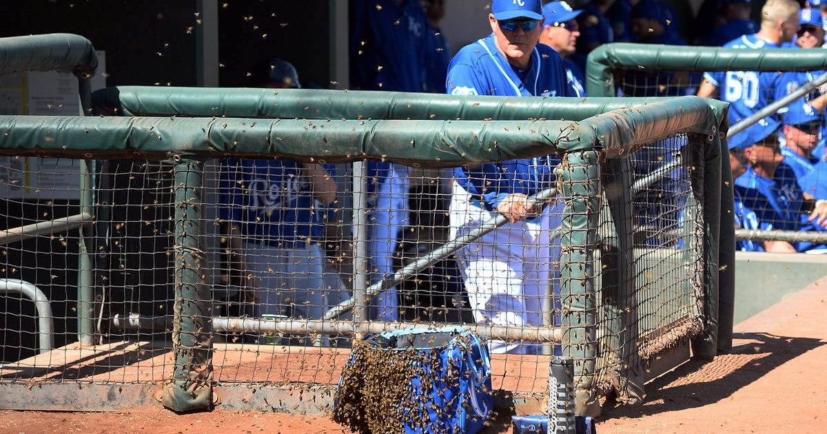 a633a42404d Swarm of bees delays Royals game against Rockies