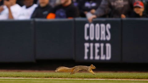 Squirrels Gone Wild: Critters and sports do mix