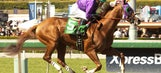 California Chrome easily wins Santa Anita Derby