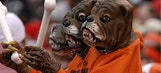 The Browns are getting an actual dog for a mascot this season