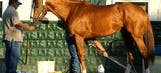 After rest, California Chrome due to return to Los Alamitos on July 17