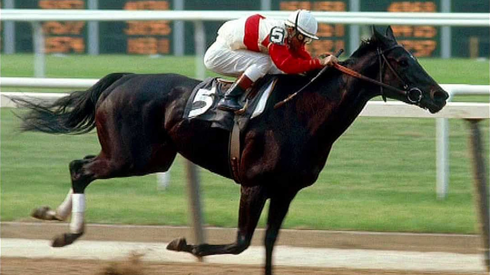 Ruffian suffered fatal injury in match race 40 years ago