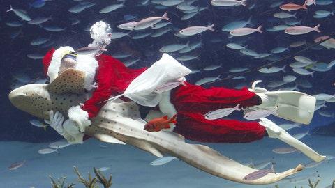Santa swimming with sharks