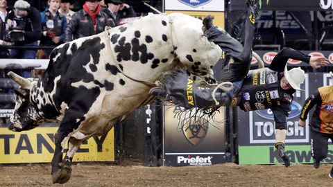 That's bull