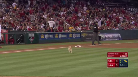 A rally cat crashes the field in Anaheim (May 12)