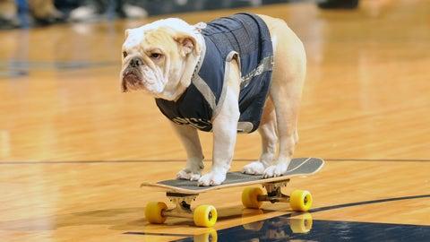 Jack the Bulldog (Georgetown)