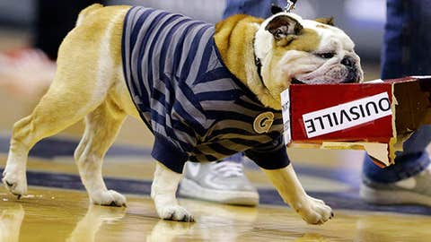 """Georgetown mascot """"Jack the Bulldog"""" tears into a box labeled as Louisville"""