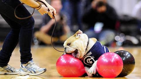 Dog eat latex world
