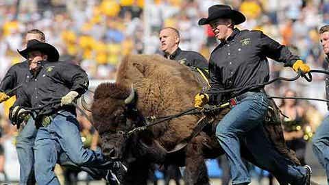 Ralphie the Buffalo