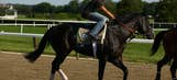 Belmont Stakes full field, odds