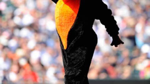 Oriole Bird, Baltimore Orioles