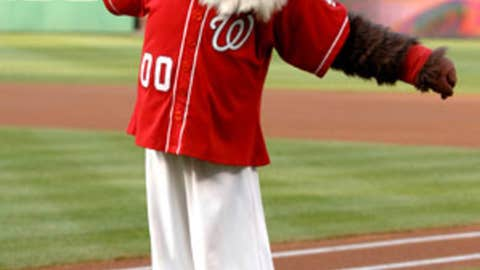 Screech, Washington Nationals