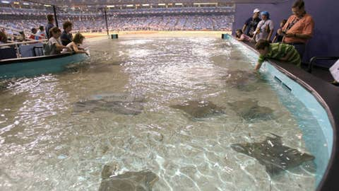 Tampa Bay Rays — Tropicana Field