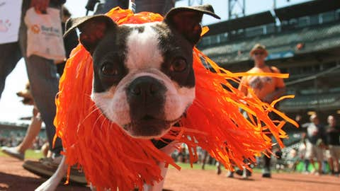 MLB dog parade