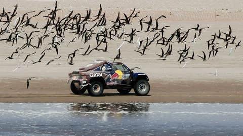 Flock of seagulls?